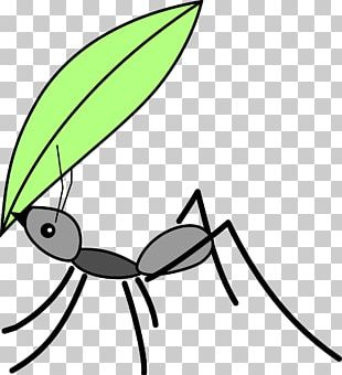 310x340 ant insect drawing illustration png, clipart, ant cartoon, ant