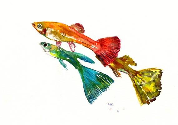 570x400 Guppy Fish Original Watercolor Painting Aquarium Fish Etsy