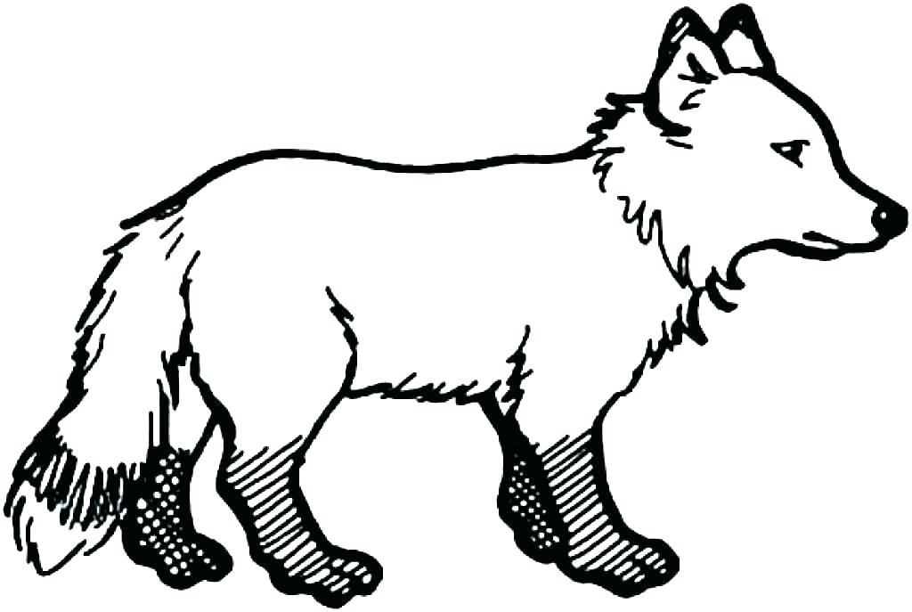 1024x687 arctic fox coloring pages baby arctic fox coloring pages