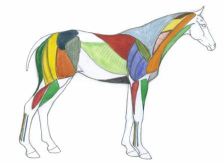 448x326 how to draw horses with eva dutton
