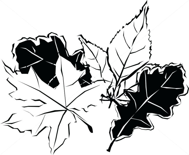 776x639 fall leaves drawing black and white autumn leaves fall leaves