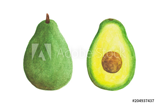 Avocado Drawing Free Download Best Avocado Drawing On Clipartmagcom