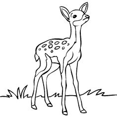 Baby Deer Drawing