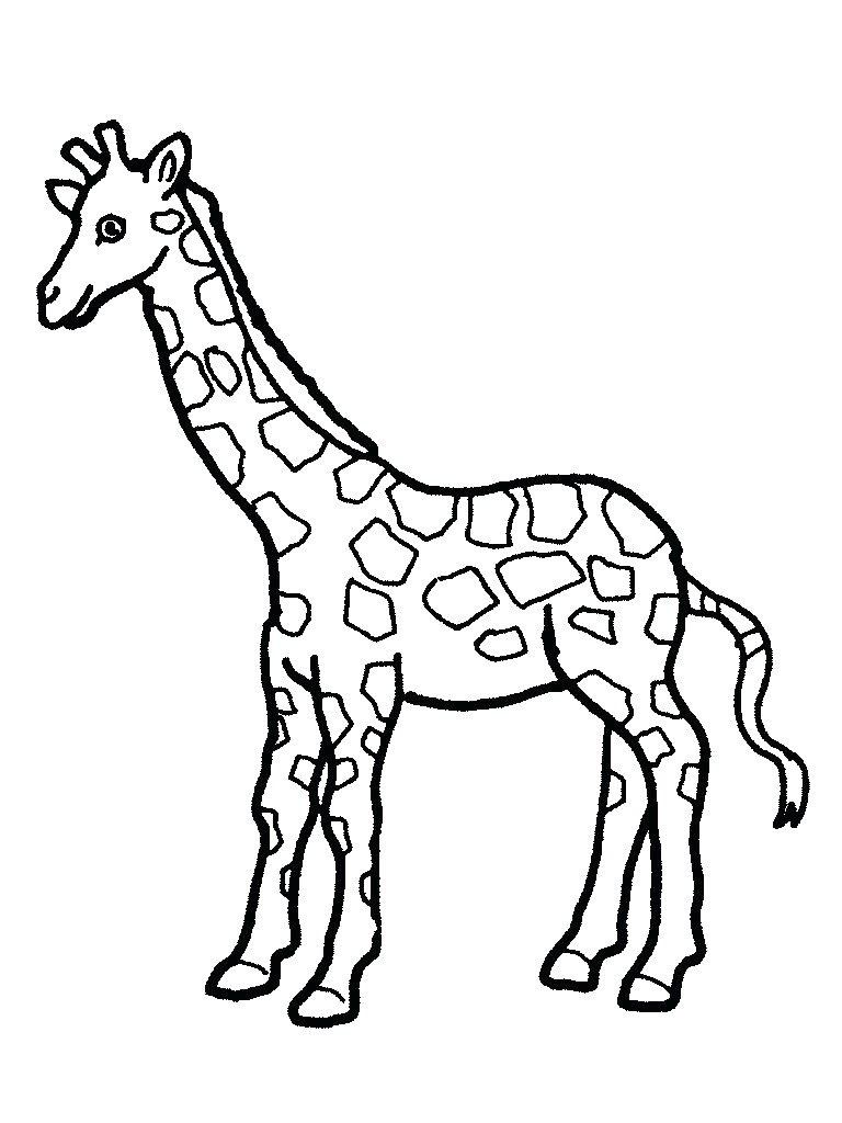 Baby Giraffe Drawing | Free download on ClipArtMag
