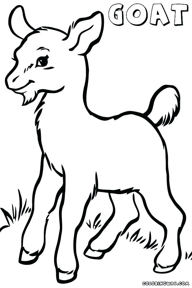 667x1000 goat coloring pictures goat at garden cute goat coloring pictures