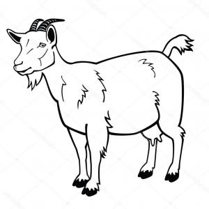 300x300 Hd With Baby Goat Vector Free Studiogrfx