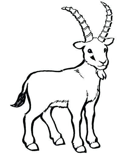 425x510 Coloring Pages Of Baby Goats