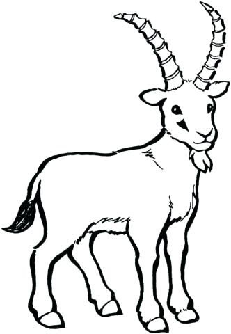 332x480 Goat Coloring Pictures