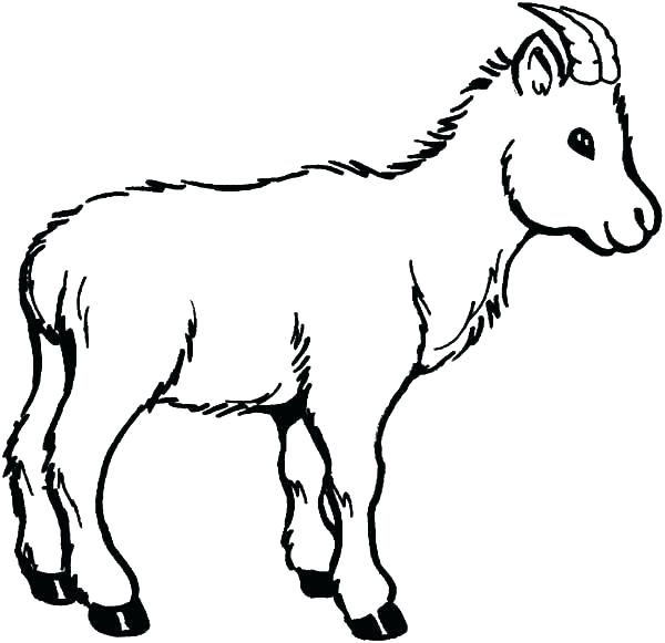 600x581 Baby Goat Coloring Pages Printable Cute Klubfogyas