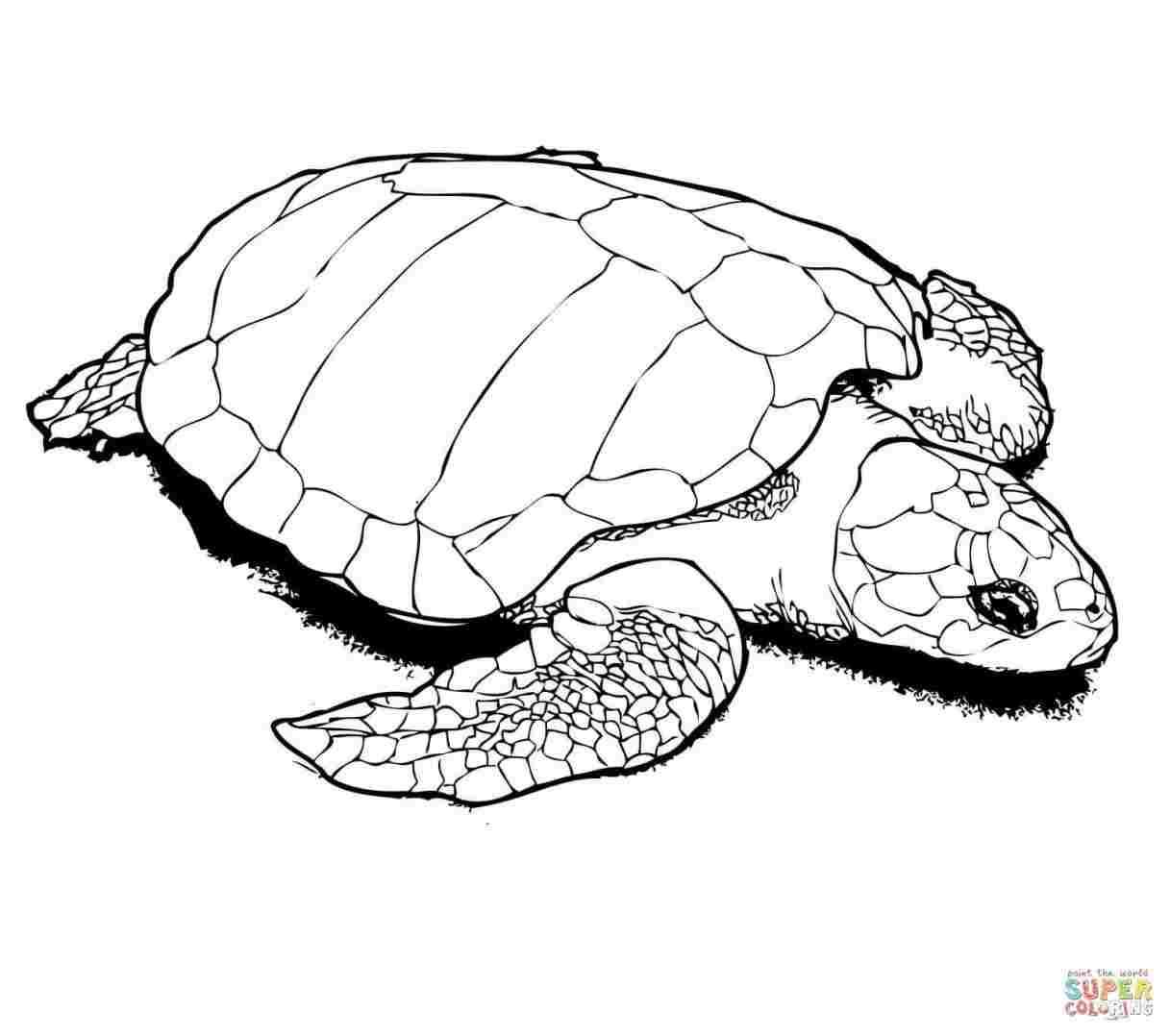 1217x1078 Cute Baby Sea Turtle Drawing