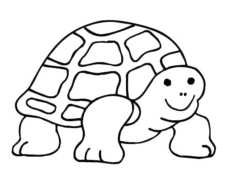 810x630 Cute Turtle Coloring Pages Sea Turtle Coloring