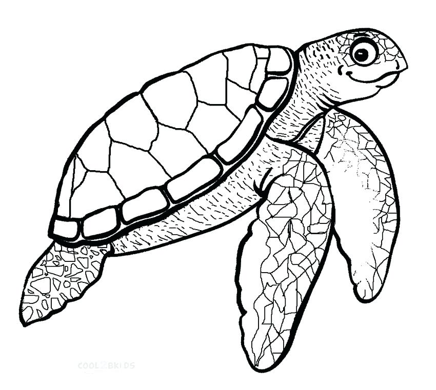 850x761 sea turtle coloring pages sea turtle coloring pages baby sea