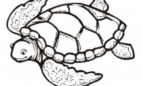 290x175 Sea Turtles Coloring Cool Collection Baby Turtle Coloring