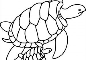 300x210 To Draw A Cartoon Sea Animals Fundraw Rhyoutubecom Turtles Cute