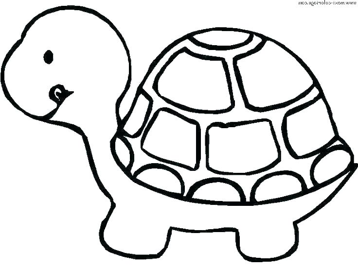 736x552 Baby Sea Turtle Coloring Pages Drawing At Free For Personal Use