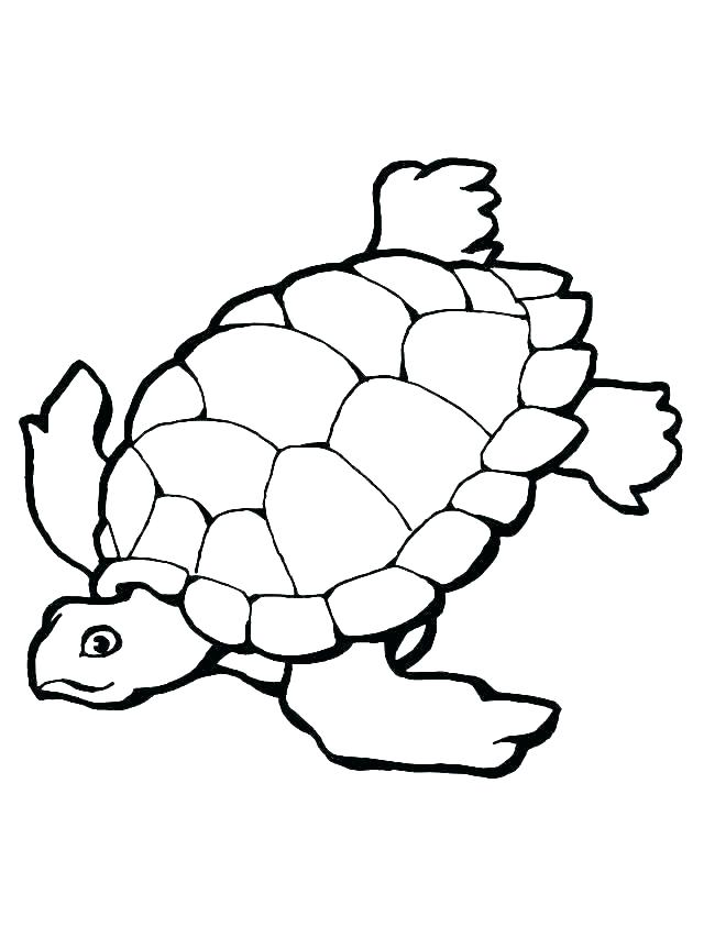 640x853 baby sea turtle coloring pages picture of kids col jadoxuvale top
