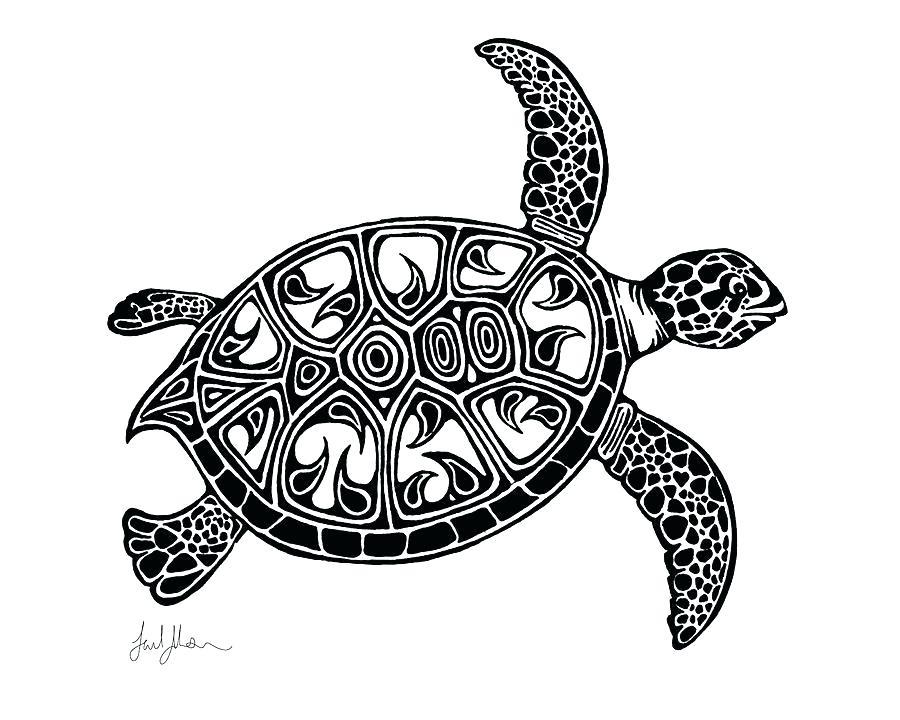 900x720 Baby Sea Turtle Sketch Dibujos Para Colorear