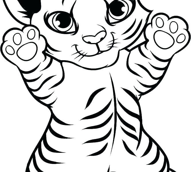 666x600 tiger pictures to colour in tiger colour drawing