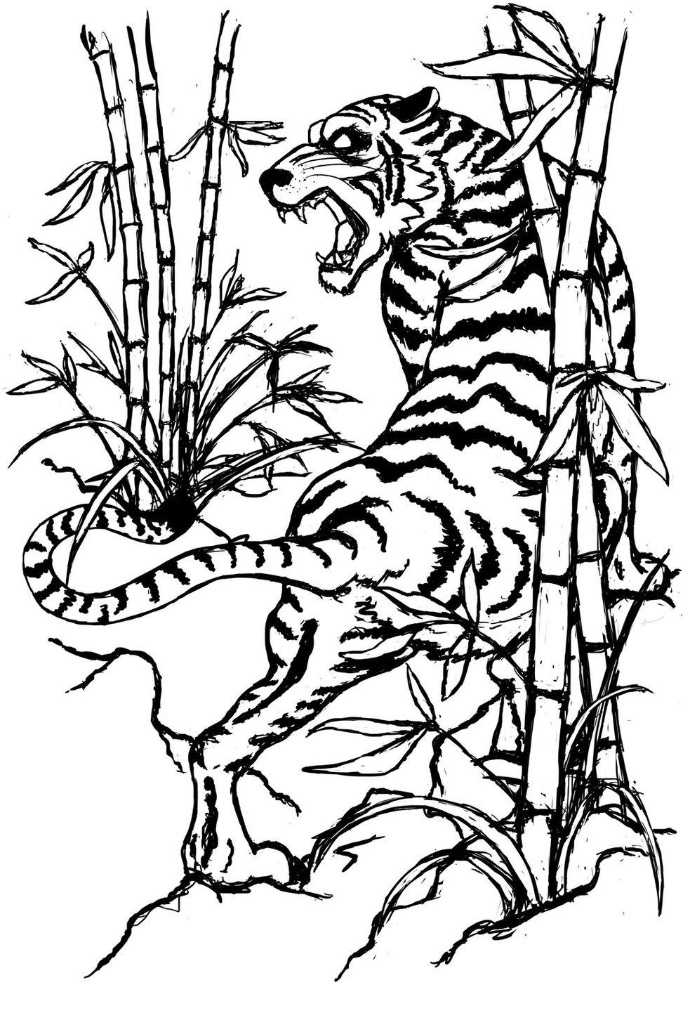 973x1459 Drawn White Tiger Bamboo Drawing