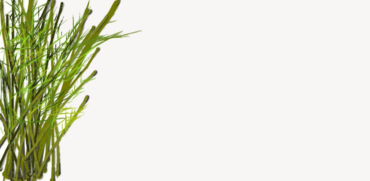 1279x625 Unfinish Bamboo Drawing