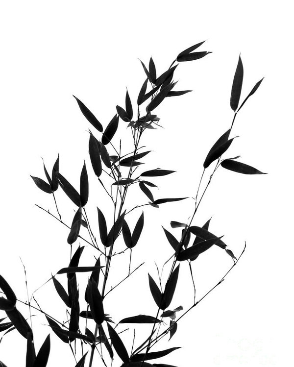 600x749 Bamboo Tree And Branches Poster