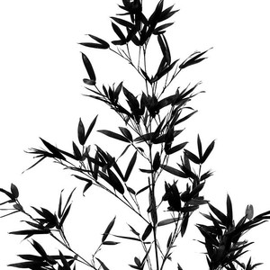 300x300 Bamboo Tree And Leaves Photograph
