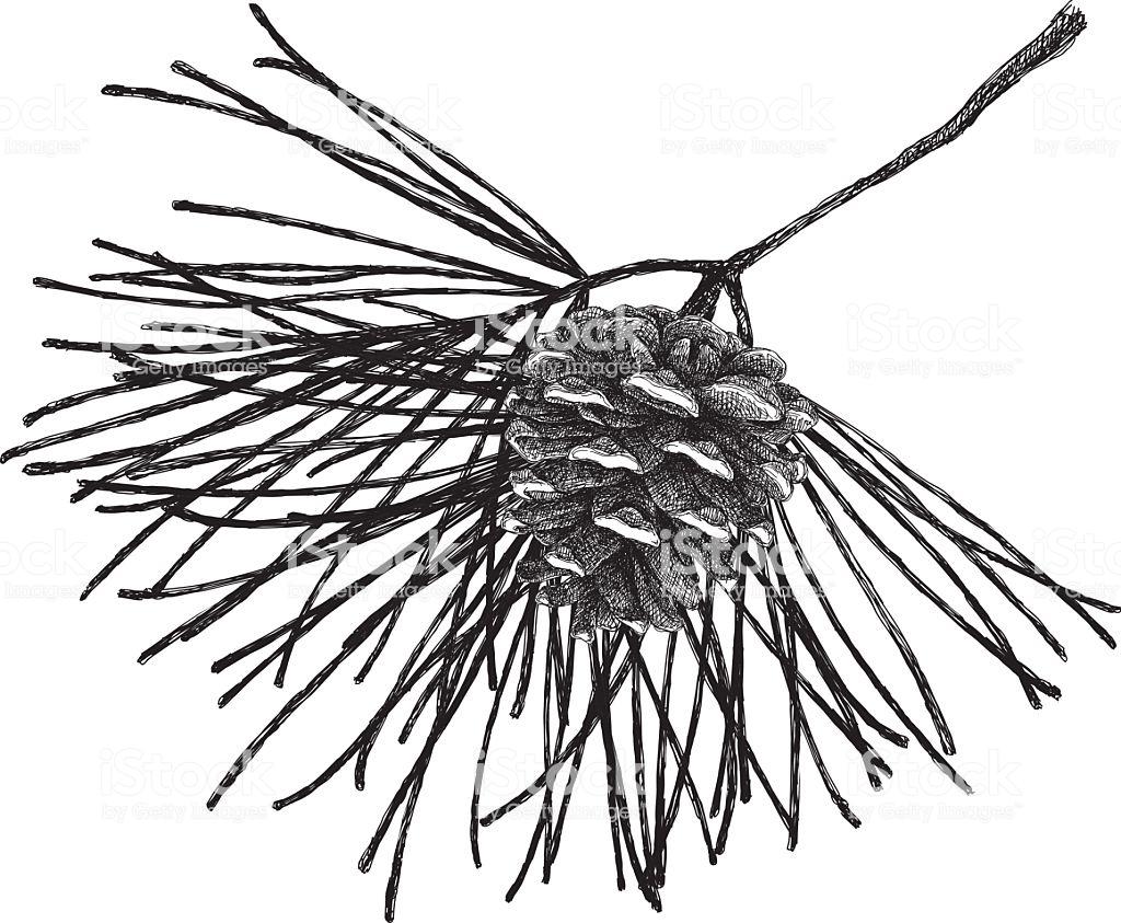 1024x843 Branch Drawing Dwg Bamboo Tree Aspen Birch Trolls Carmi Chaelinn