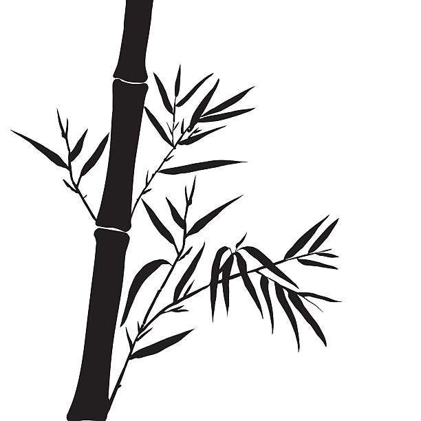612x612 Collection Of Free Bamboo Clipart Bamboo Branch Amusement