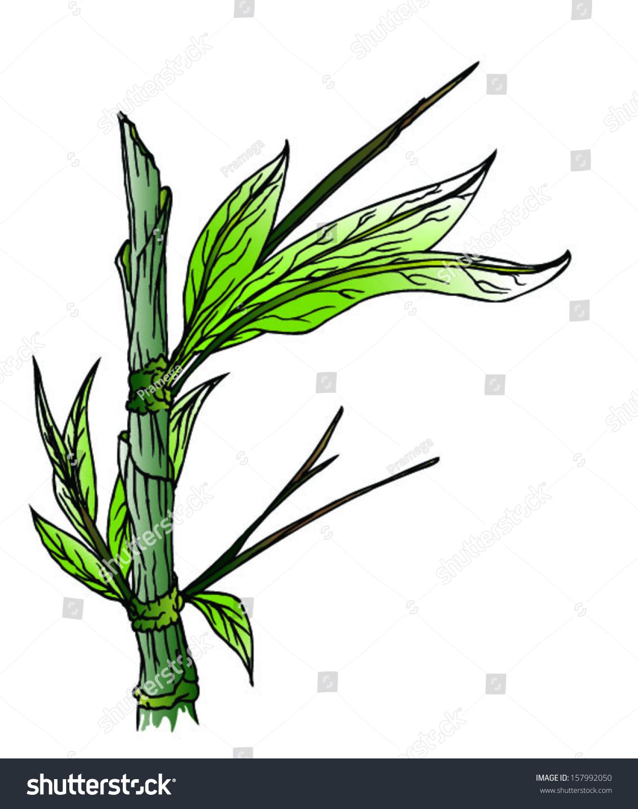 1263x1600 Bamboo Blender Drawing Tree Download Botanical Digital Pads Tablet