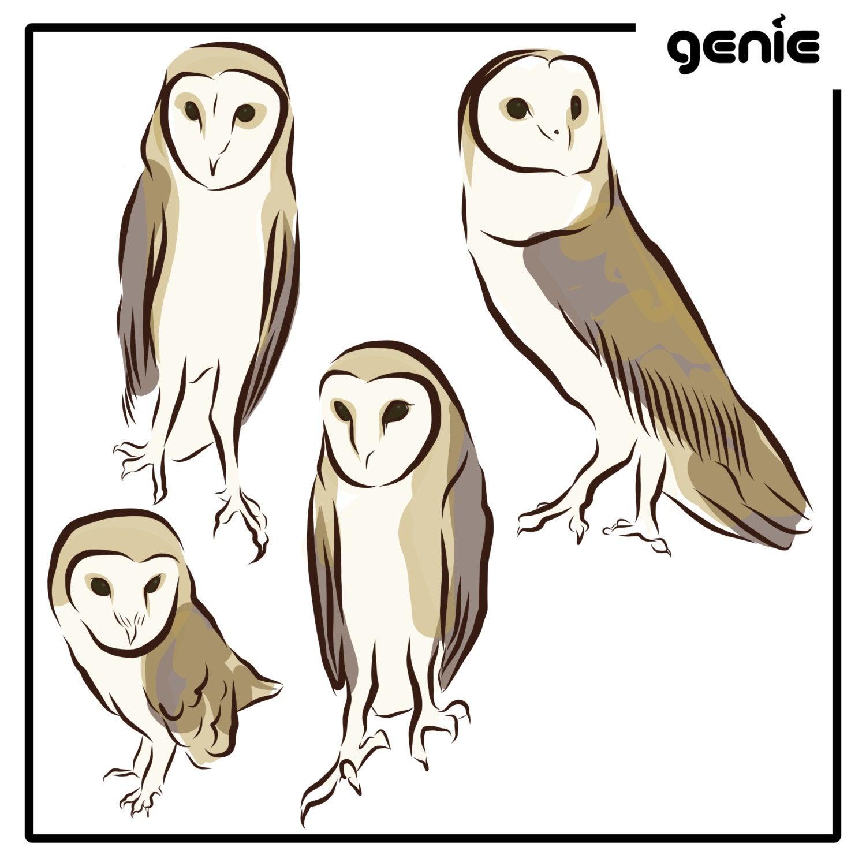 1500x1500 Barn Owl Bird Vector Graphic Illustration Hand Drawn Drawing Etsy