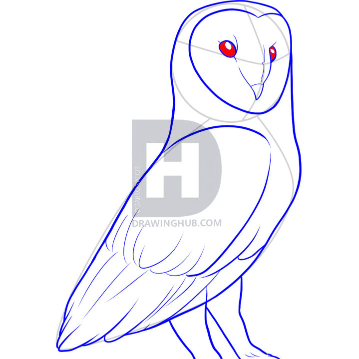 719x719 How To Draw A Barn Owl, Step