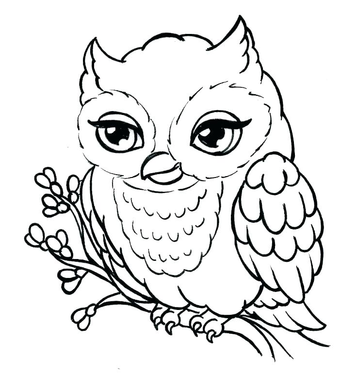 Basic Owl Drawing | Free download on ClipArtMag