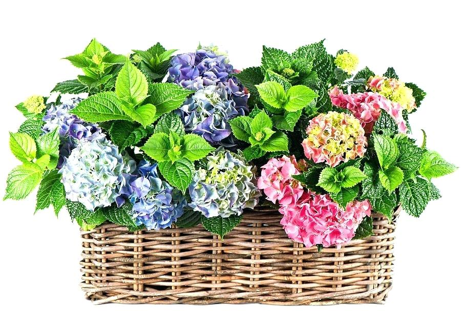 900x607 Flowers Basket Drawing Beautiful In Photograph