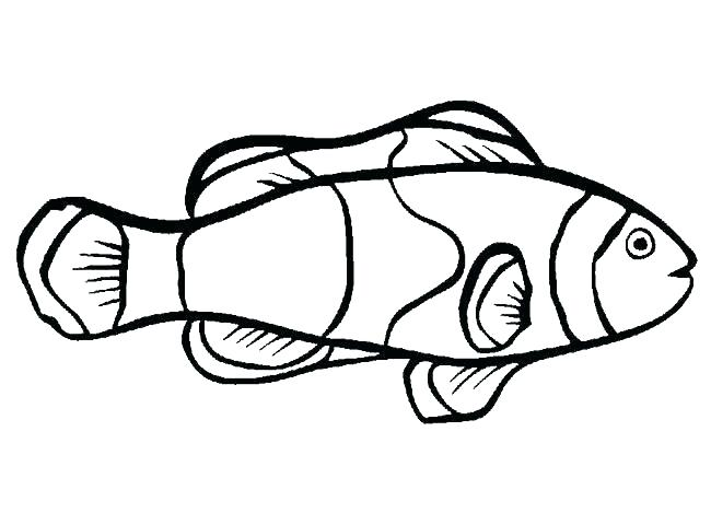 650x469 bass fish coloring pages bass fish bass fish coloring pages bass