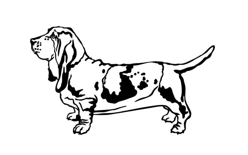 794x497 basset hound dog decal basset dog breed decal basset hound etsy