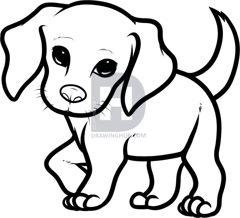 793x720 how to draw a beagle puppy, beagle puppy, step
