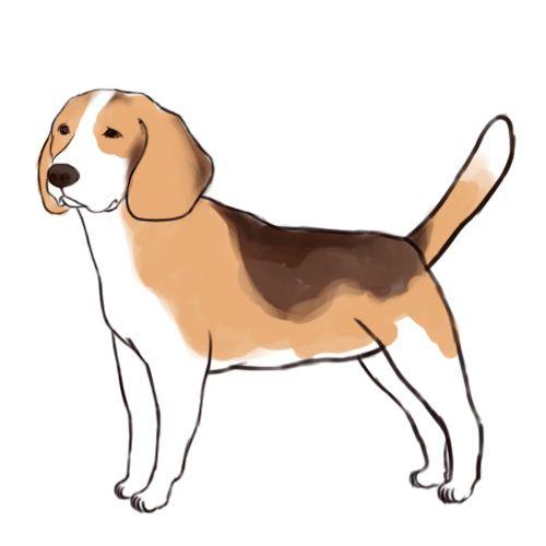 500x500 how to draw a beagle pretty piper custom canvas beagle