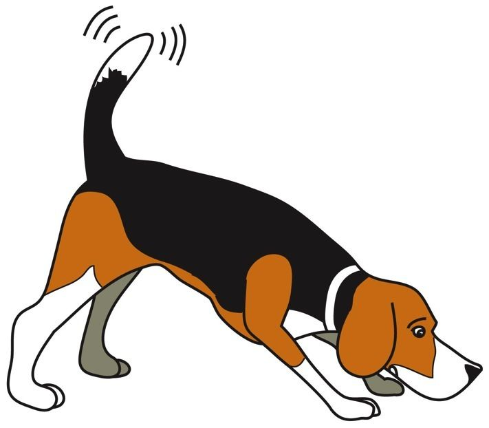 711x622 another beagle drawing beagle love!! beagle art, beagle