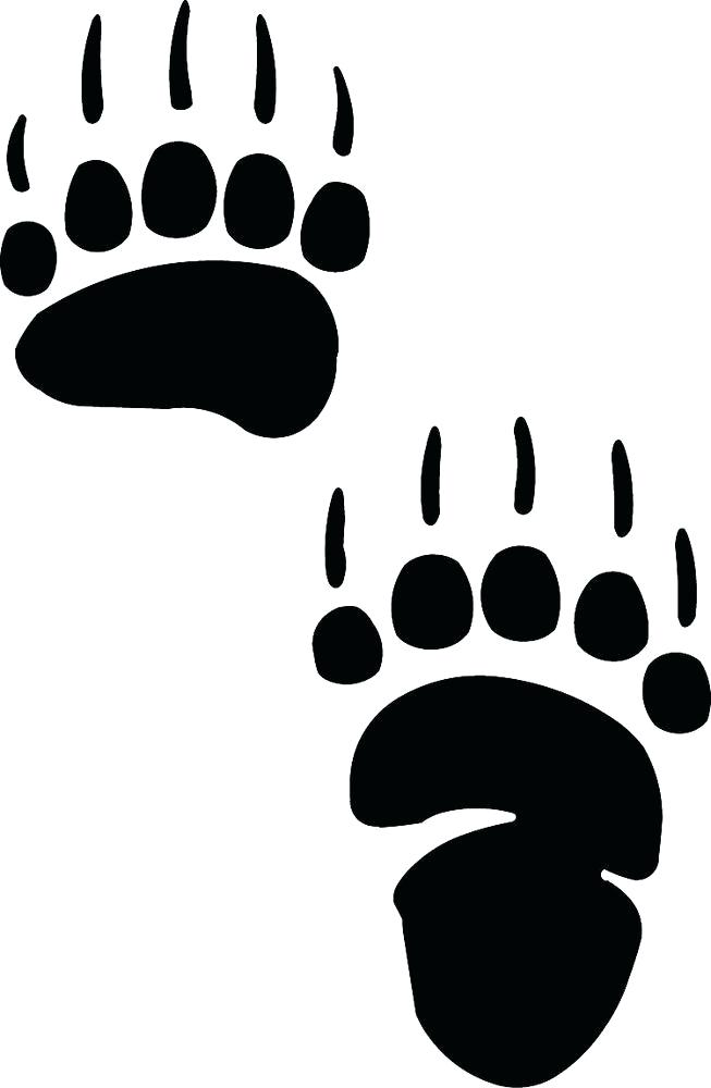 Bear Paw Drawing