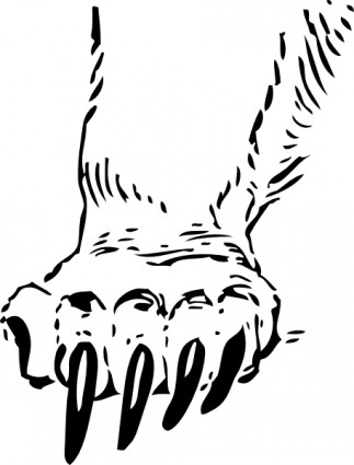 323x425 Bear Paw Drawing