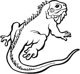 260x239 image result for bearded dragon outline image viper coloring