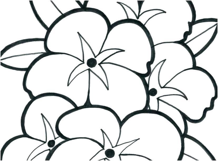 827x609 pretty flowers drawings draw pretty flowers how to draw a pretty