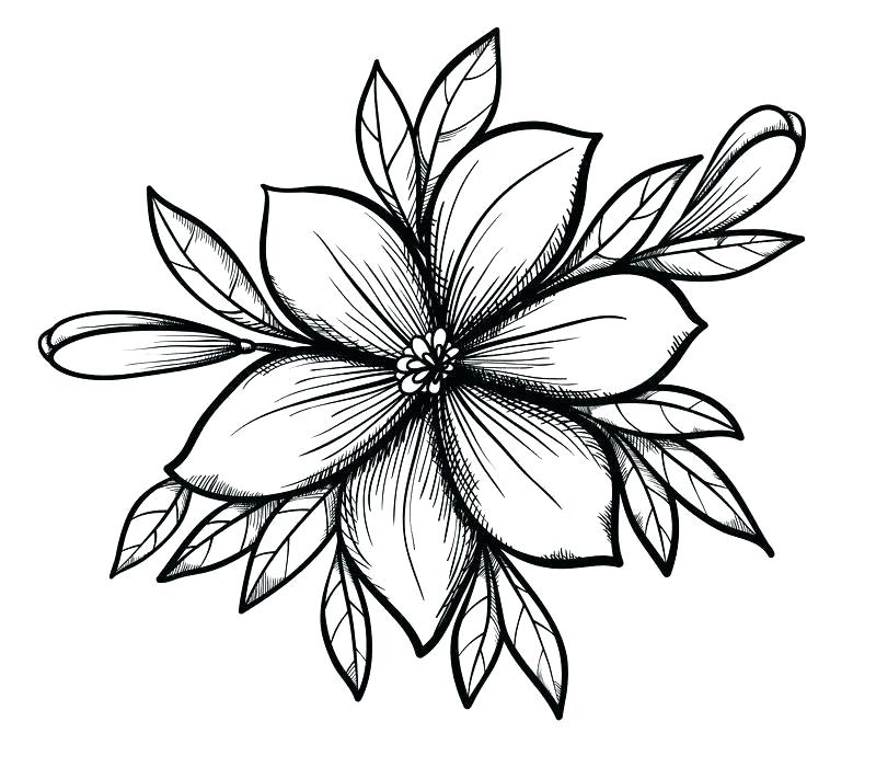 800x701 pretty drawings of flowers pretty flowers to draw step