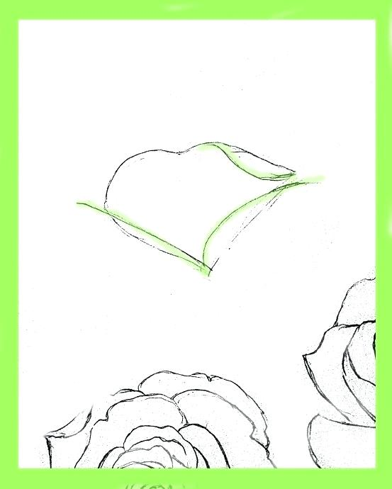 553x690 drawings of easy roses how to draw roses drawings easy roses