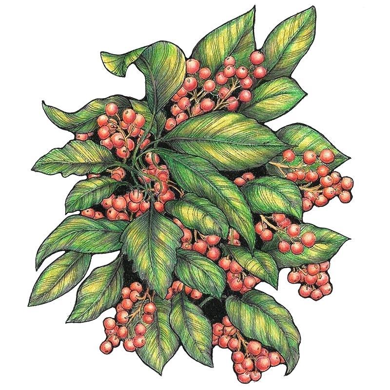 800x799 drawing of berries berries sketch seamless pattern vector