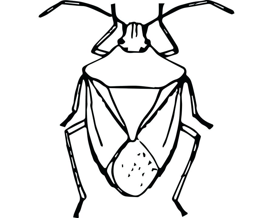 900x720 Drawing Of A Bug Cute Big Eyes Drawing