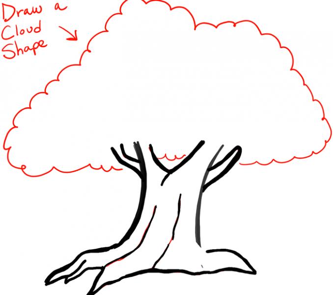 678x600 how to draw a big tree draw an oak tree angel oak tree fun places