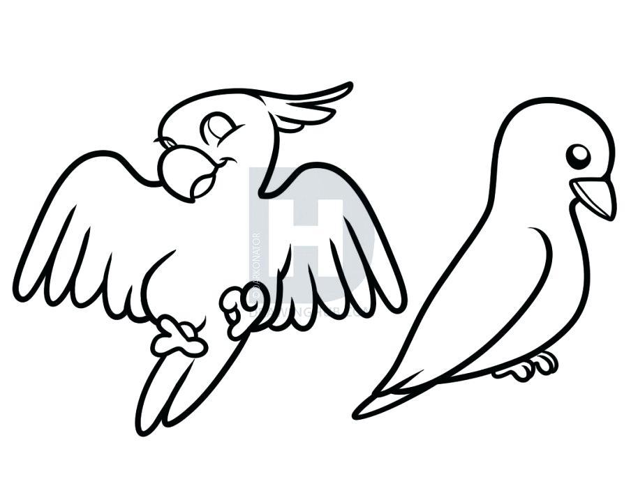 904x720 How To Draw Birds How To Draw Birds