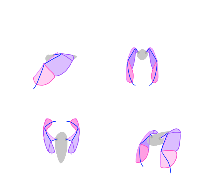 700x609 How To Draw And Animate Wings Birds, Bats, And More