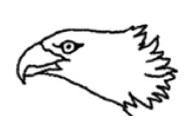 750x500 How To Draw An Eagle Flying Realistic, Head, Easy And Step